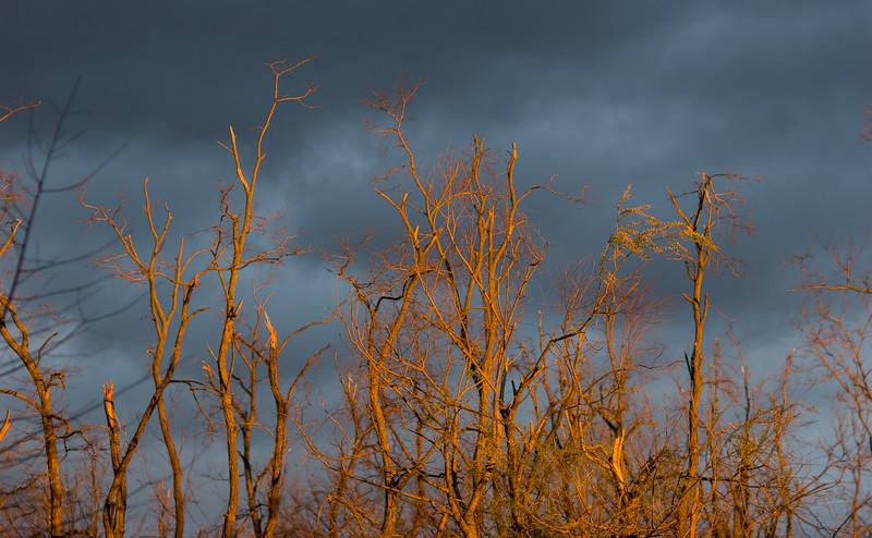 Sunlit twigs