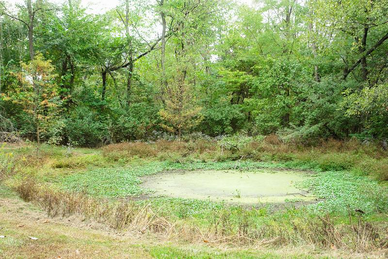 upper pond, Oct 2007