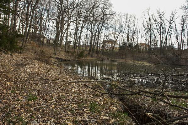 Lower pond, Feb, 2008