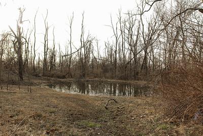 Upper pond, 2008