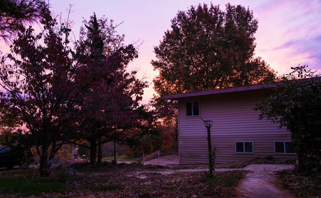Rising sun illuminates grandmother oak