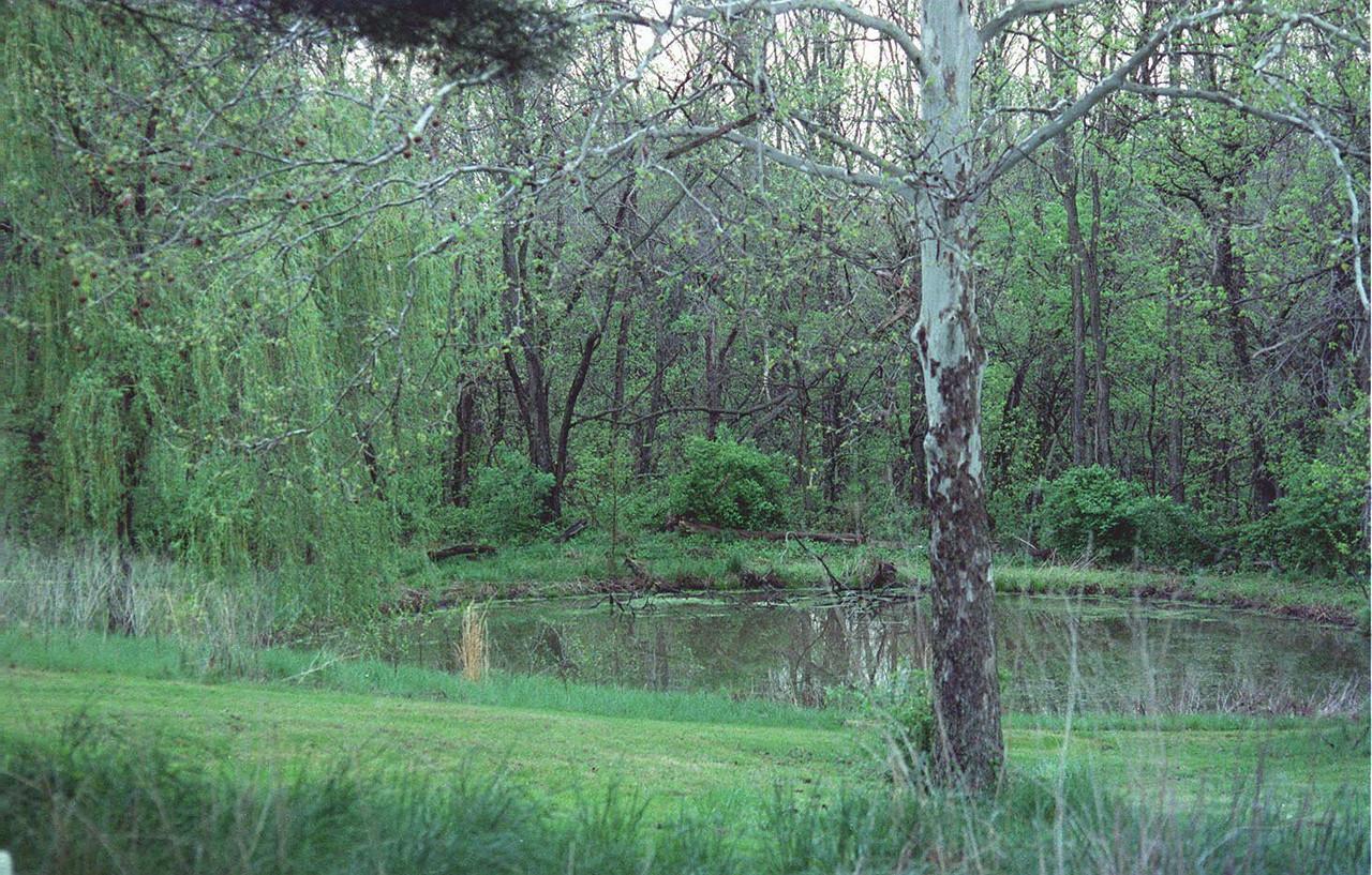 upper pond, 2003