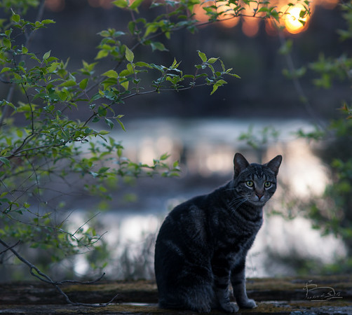 Cat Portrait by the lower pond