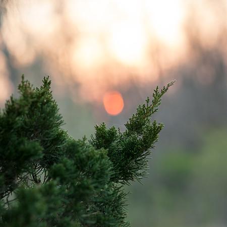 Sunset and cedar