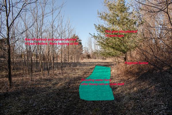 Eastern edge of east field