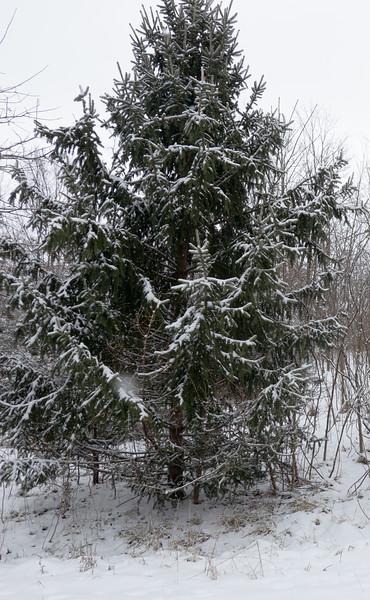 tree portrait-00002-DSC02027