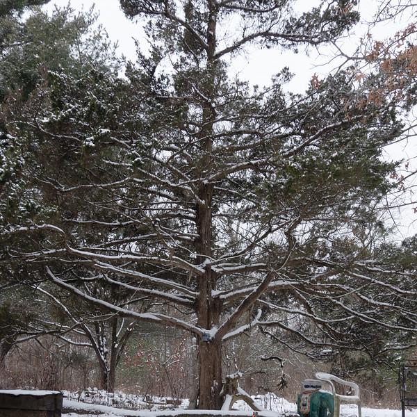 tree portrait-00003-DSC02093