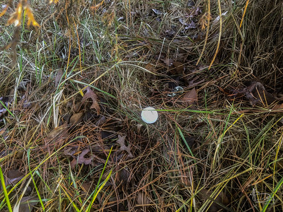 A nitro 3 golf ball, fresh, could only have got here from the place to the north?  Several hundred yards away from the golf course subdvision and more than a thousand from the nearest part of the course.