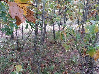 The little grove