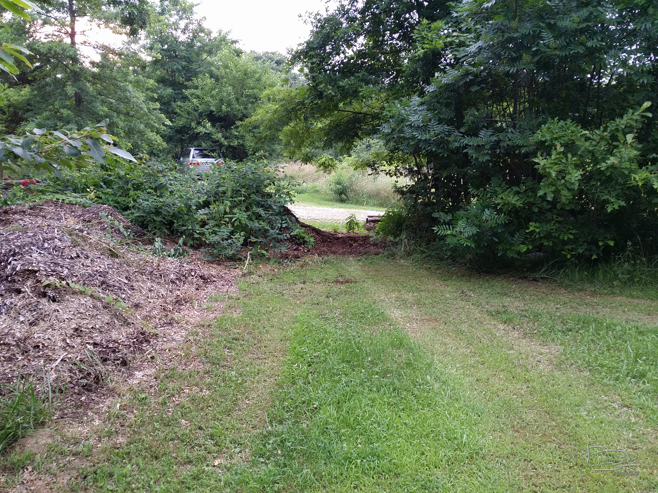 opened up path through the wood chip pile.