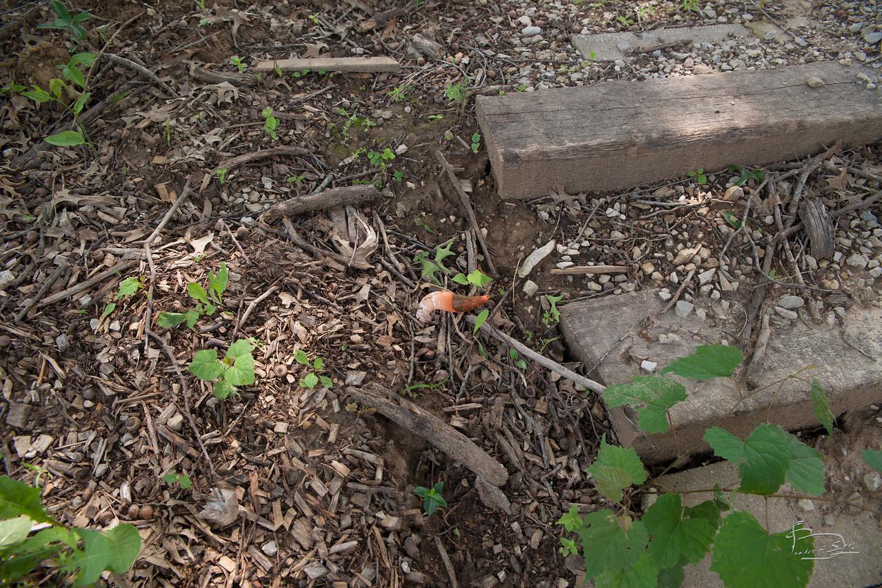 strange orange fungus tube 1