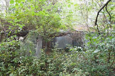 Aviary repair and renovation