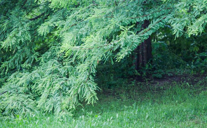 Bald cypress shelter