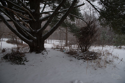 20150228 snowing walkabout_003_07516