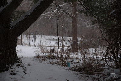 20150228 snowing walkabout_005_07518