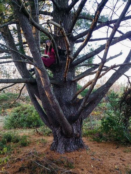 Tree sitting
