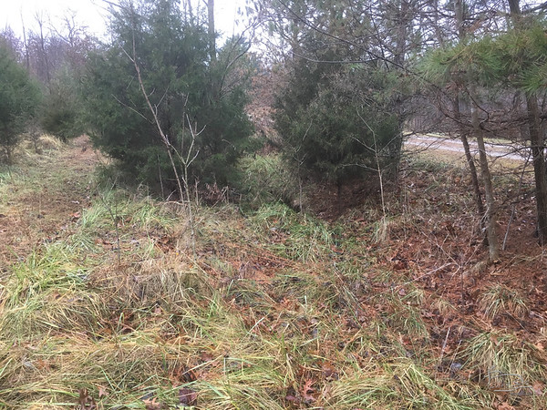 The ditch on the south side of the drive has several spots where water collects, just south of the row of pines.