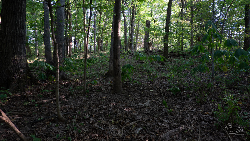 a natural understory