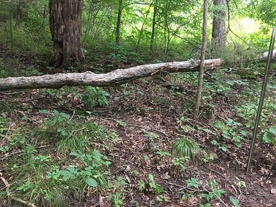 Needs chain saw work