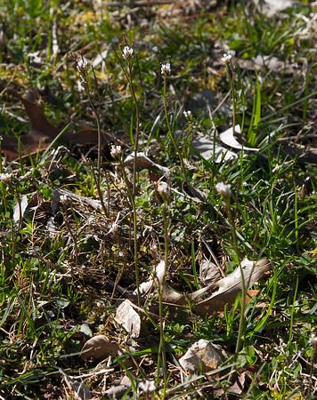 Woodland floor flower