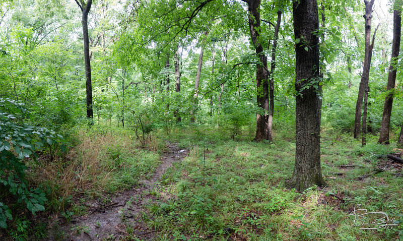 main path central forest