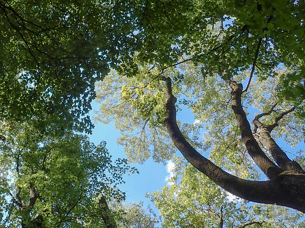 central forest canopy