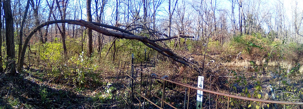 A black locust top fell on a hackberry that had grown up next to it.    This is one of those proceed with lots of caution.  So yesterday we moved the fencing out of the way and today did an much brush removal, including another smaller tree that had fallen also.