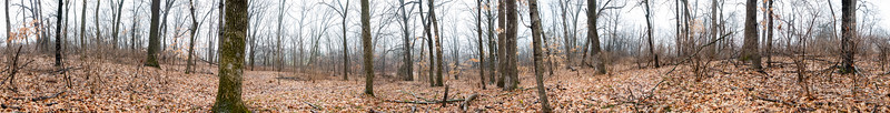 central forest 360 pano DSC00935-Pano