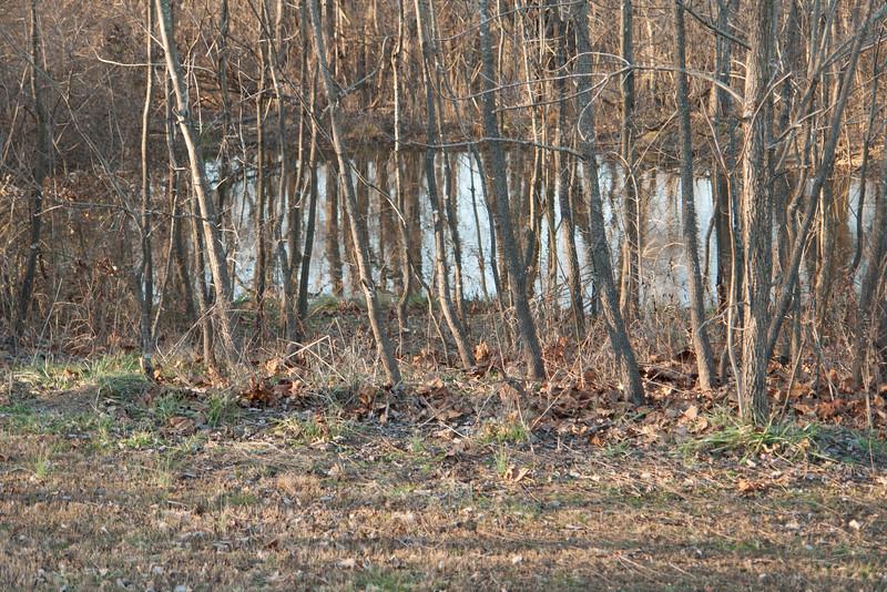 Oak,Persimmon,Walnut grove