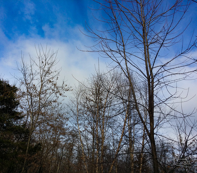 Branching patterns