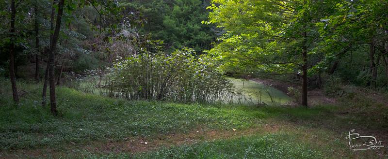 Rose Mallow 2020 pond view-00005-DSC02725-Pano