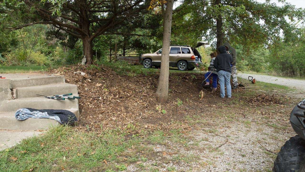 clearing creeping juniper