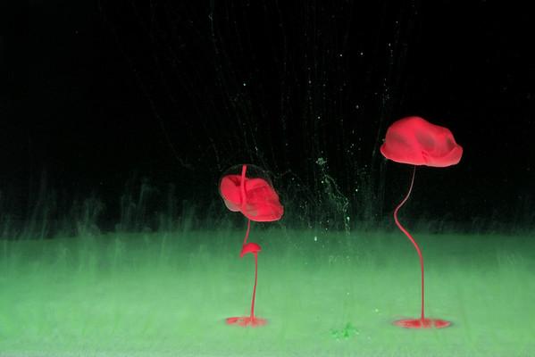 Poppy Dance