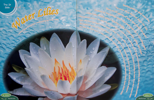 My water lily in REAL mag.