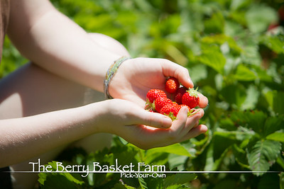 BerryBasket - 2020-06-16 IMG_4582