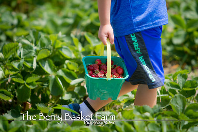 BerryBasket - 2020-06-15 IMG_4556