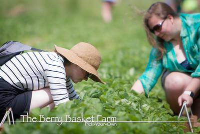 BerryBasket - 2020-06-15 IMG_4523