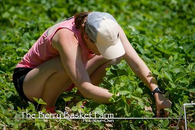 BerryBasket - 2020-06-16 IMG_4572