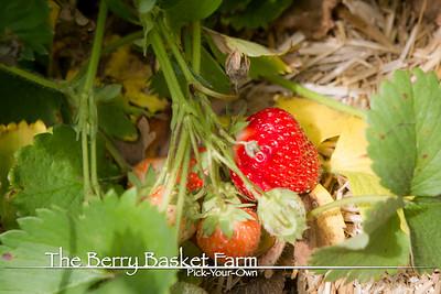 BerryBasket - 2020-06-20 IMG_4677