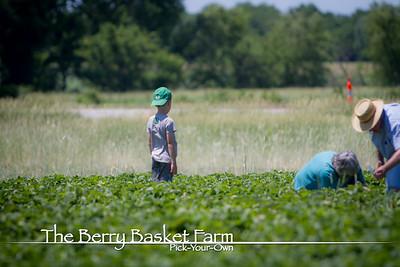 BerryBasket - 2020-06-16 IMG_4611