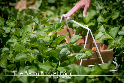 BerryBasket - 2020-06-16 IMG_4590