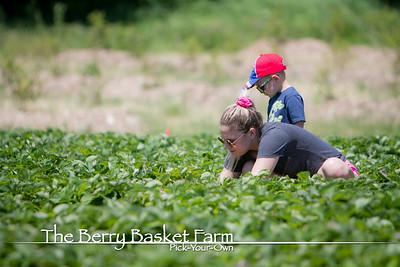 BerryBasket - 2020-06-16 IMG_4613