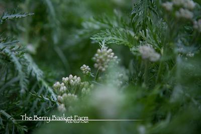 BerryBasket - 2021-05-19 IMG_8061