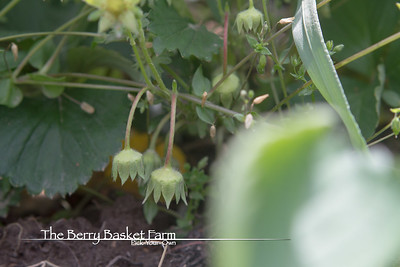BerryBasket - 2021-05-19 IMG_8073