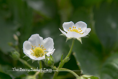 BerryBasket - 2021-05-19 IMG_8070
