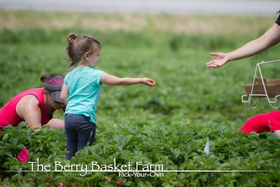 BerryBasket - 2020-06-15 IMG_4497