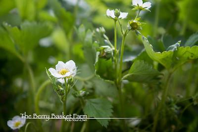 BerryBasket - 2021-05-19 IMG_8090