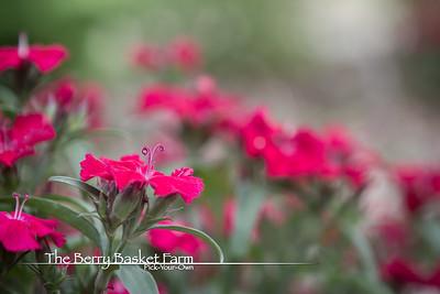 BerryBasket - 2021-05-19 IMG_8055