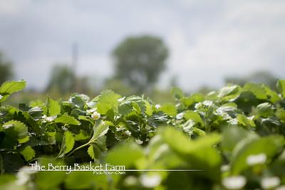 BerryBasket - 2021-05-19 IMG_8082