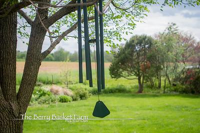 BerryBasket - 2021-05-19 IMG_8043